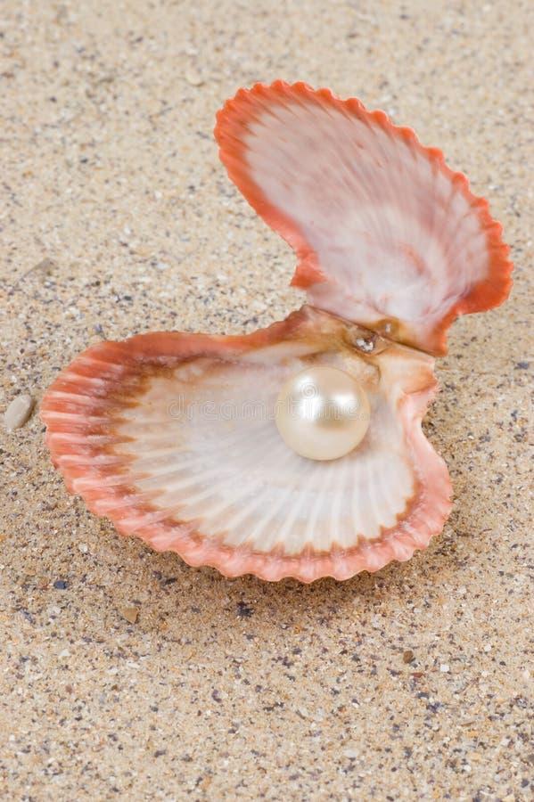 Parel in shell royalty-vrije stock foto's