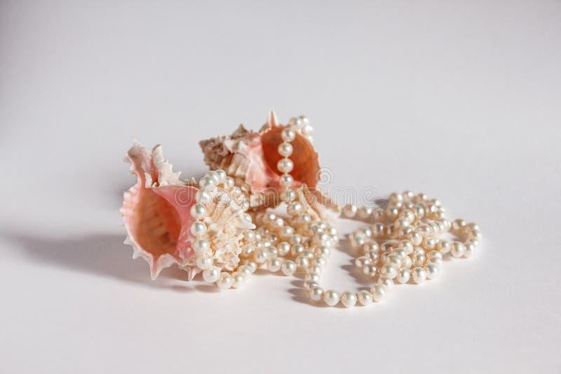 Parelhalsband en zeeschelpen royalty-vrije stock afbeelding