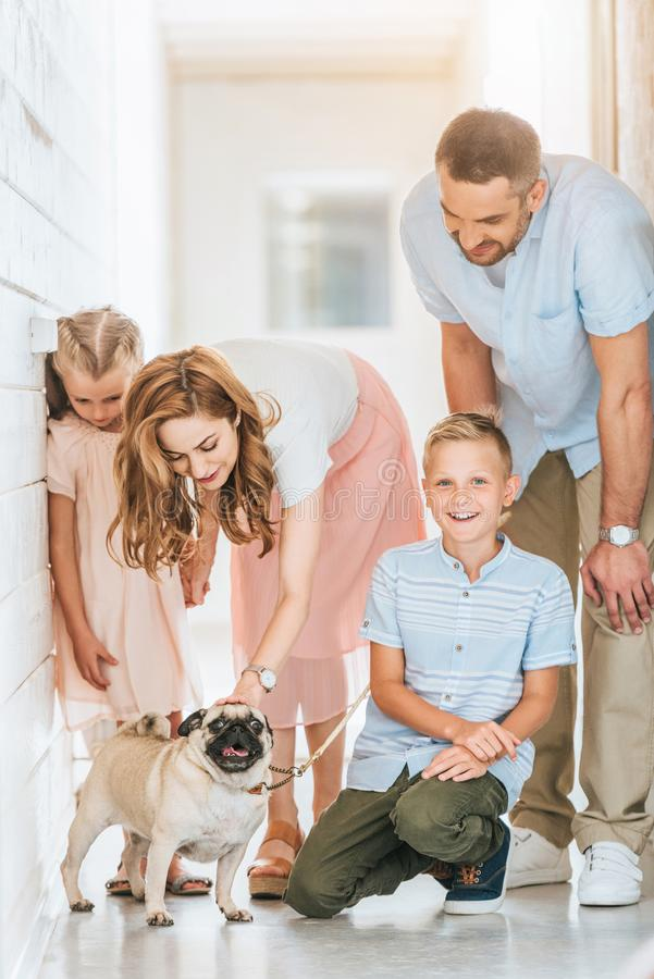 Parents and children palming adopted pug dog at animals. Shelter stock photo