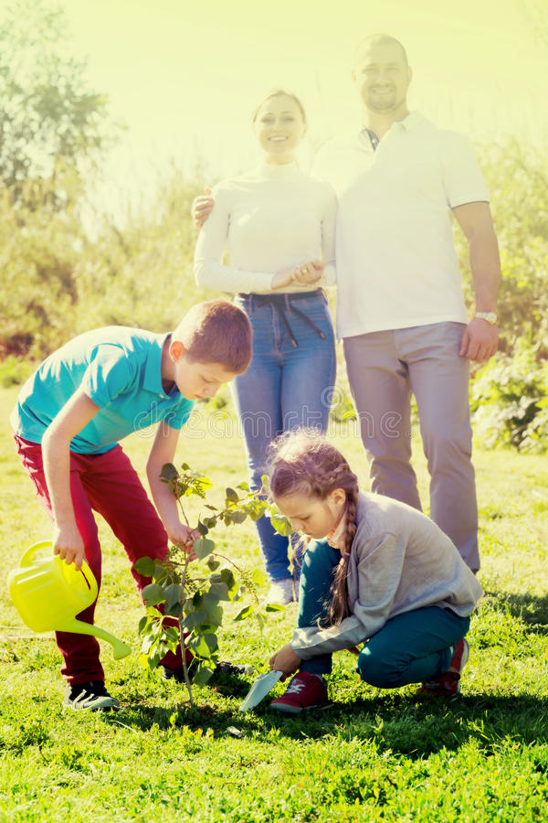 Parents with two kids planting a bush royalty free stock image