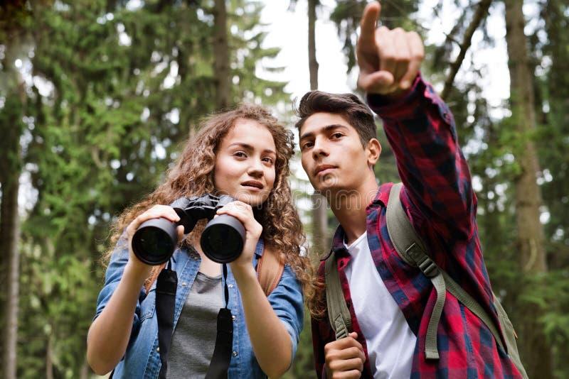 Pares adolescentes que caminan en vacaciones de verano del bosque imágenes de archivo libres de regalías