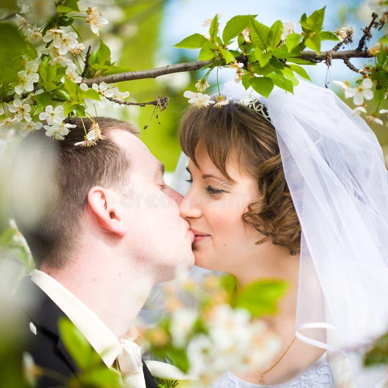 Download Pares do casamento foto de stock. Imagem de feliz, groom - 29841816