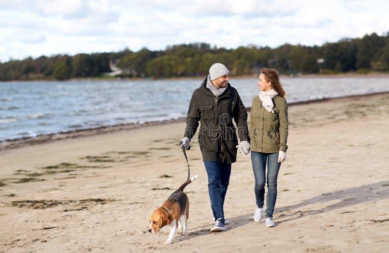 Pares con el perro del beagle que camina a lo largo de la playa del otoño fotografía de archivo