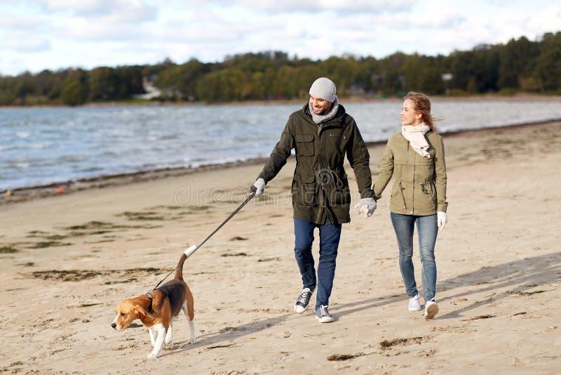 Pares con el perro del beagle que camina a lo largo de la playa del otoño imágenes de archivo libres de regalías
