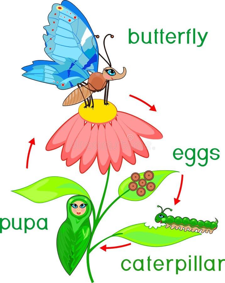 Pares de acoplamiento de las libélulas que colorean el ciclo del pageLife de la mariposa Secuencia de etapas del desarrollo del h libre illustration