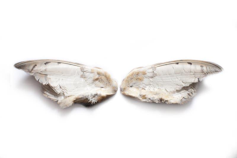 Pares de alas del búho imagenes de archivo