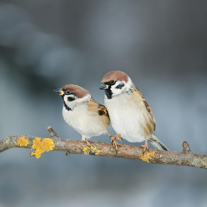 Pares de amantes de los pájaros que se sientan en una rama en el jardín fotos de archivo