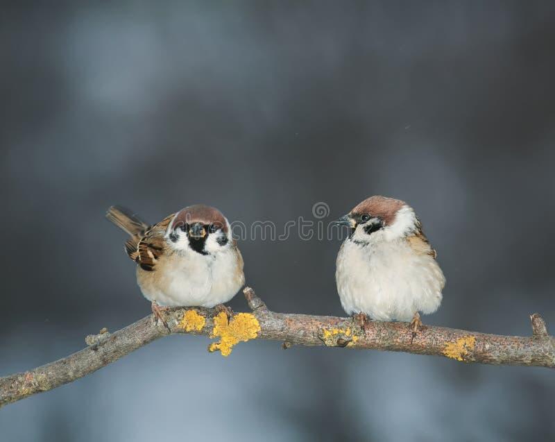 Pares de amantes de los pájaros que se sientan en una rama en el jardín imagen de archivo
