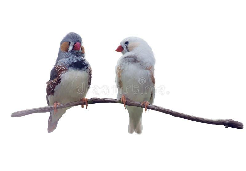 Pares de aquarela castanha-orelhuda dos passarinhos fotografia de stock