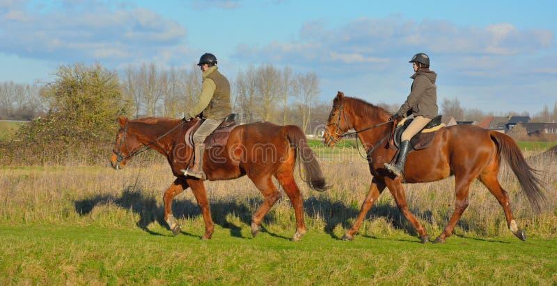 Pares de cavalos com seus motoristas imagem de stock royalty free