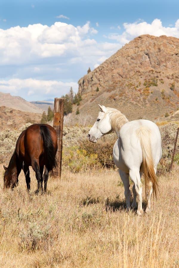 Pares de cavalos no pasto fotos de stock royalty free