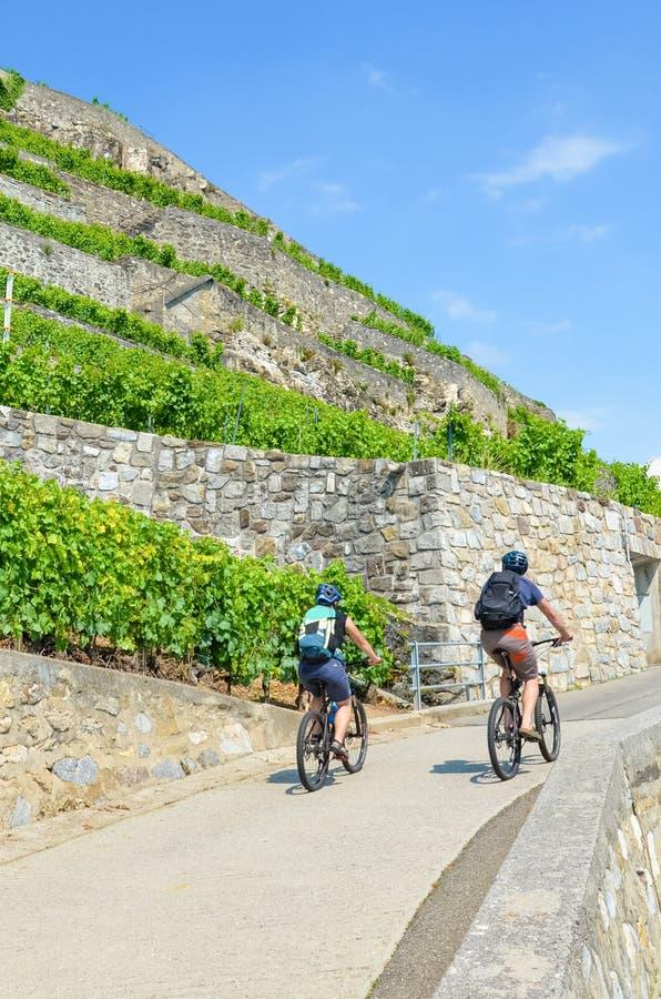 Pares de ciclagem no trajeto ao longo dos vinhedos terraced verdes na região suíça do vinho de Lavaux O vinhedo bonito é ficado s imagens de stock royalty free