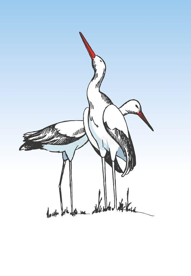 Pares de cigüeñas stock de ilustración