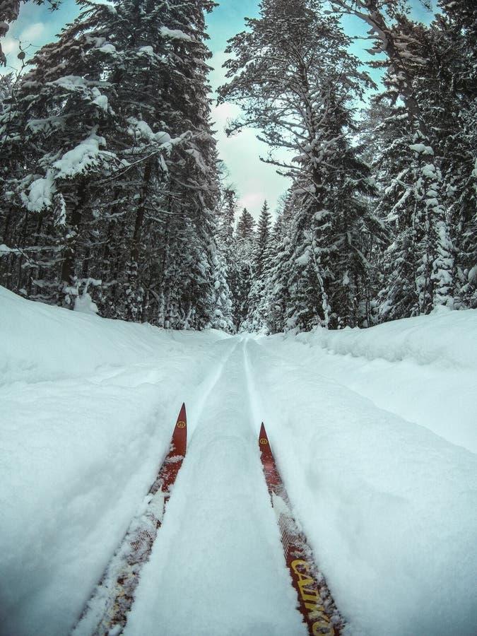 Pares de esquis vermelhos que montam na trilha do esqui corta-mato no fim nevado da floresta do inverno acima do ponto de vista fotos de stock