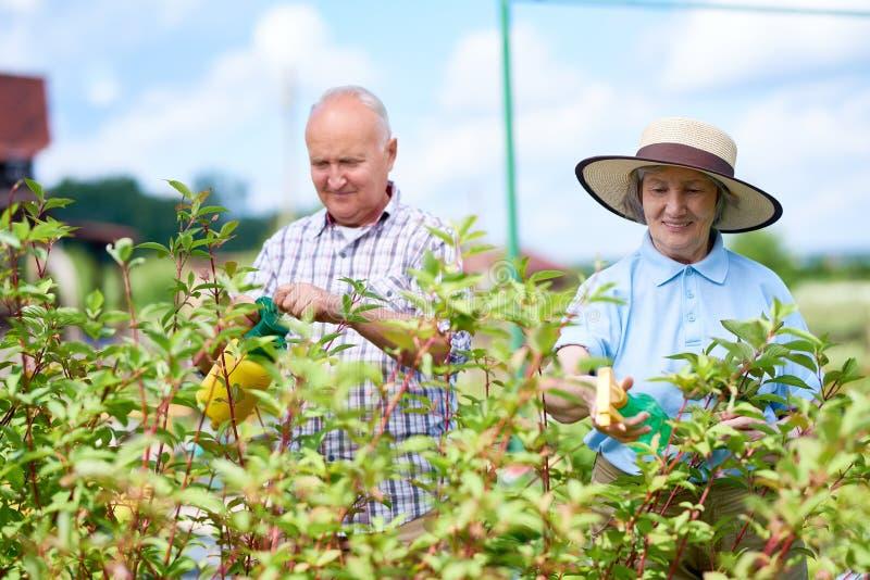 Pares de fazendeiros superiores que trabalham no jardim foto de stock