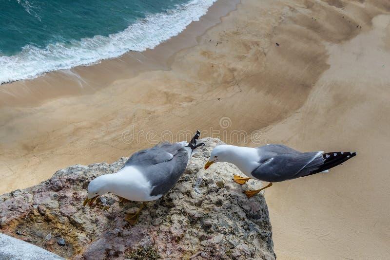 Pares de gaivota na rocha sobre a areia foto de stock