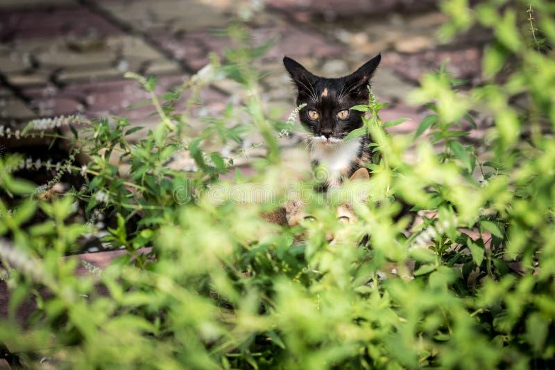 Pares de gatos somestic que olham a câmera fotografia de stock