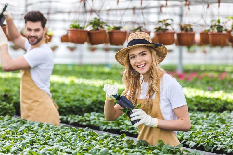 Pares de jardineiro com pás que plantam flores fotos de stock