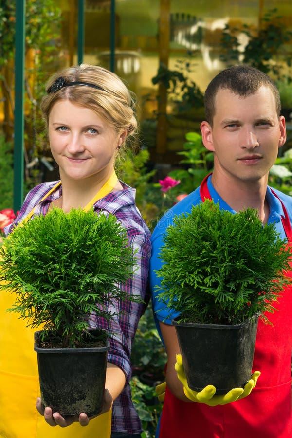 Pares de jardineros en una forma especial que sostiene una planta en conserva en sus manos fotos de archivo