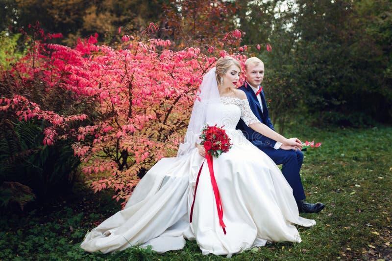 Pares de la boda cerca del arbusto rojo foto de archivo