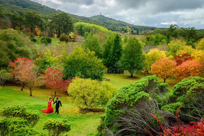 Pares de la boda en parque del otoño imagen de archivo