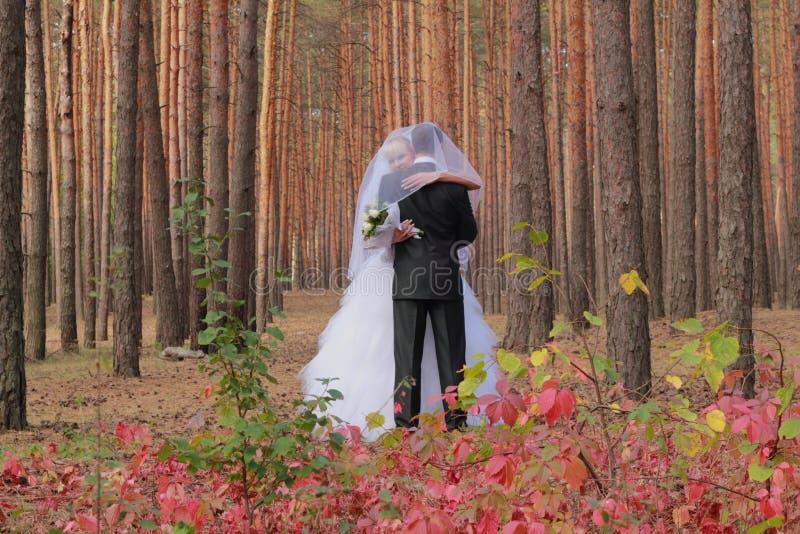 Pares de la boda en un bosque foto de archivo libre de regalías