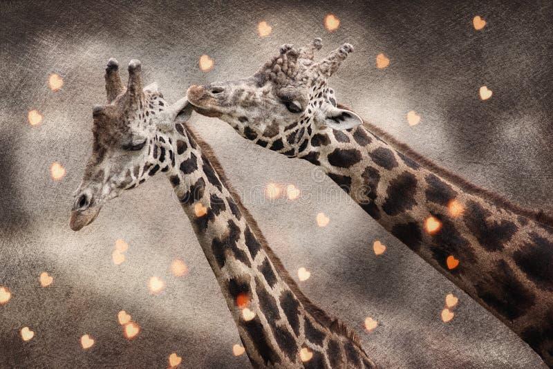 Pares de la jirafa en amor imagenes de archivo