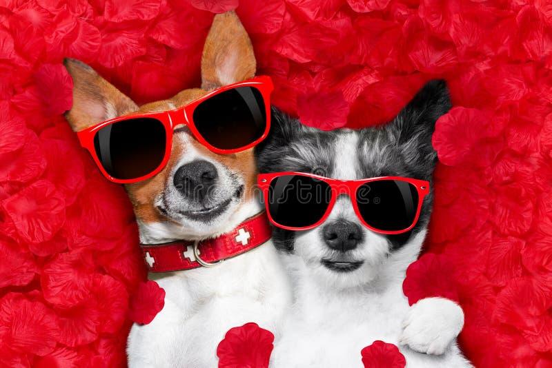 Pares de las tarjetas del día de San Valentín de perros en amor fotografía de archivo libre de regalías