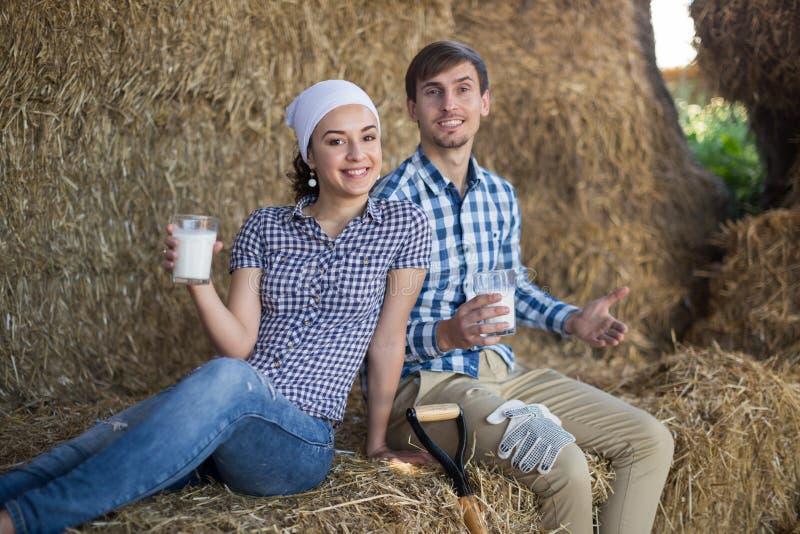 Pares de leite bebendo dos fazendeiros no hayloft na explora??o agr?cola imagens de stock