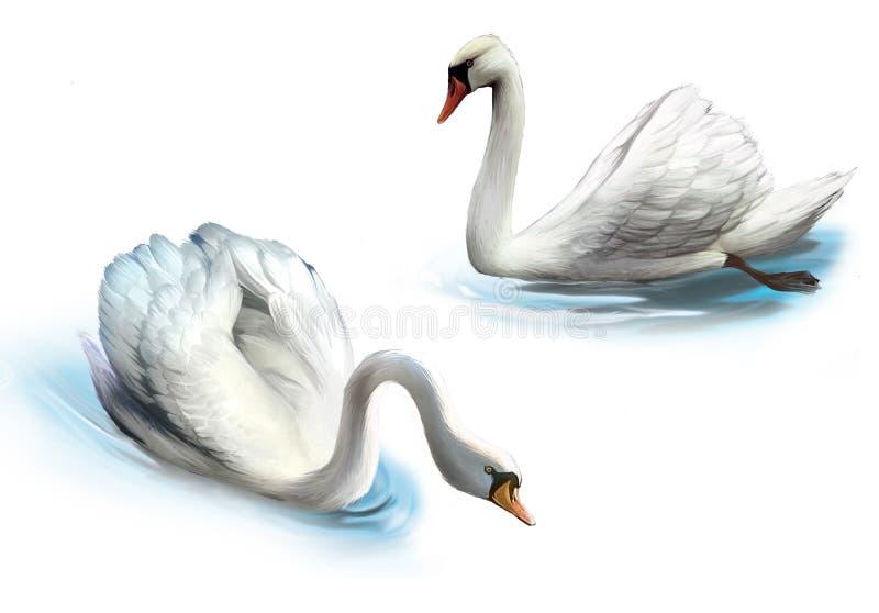 Pares de los cisnes blancos, libre illustration