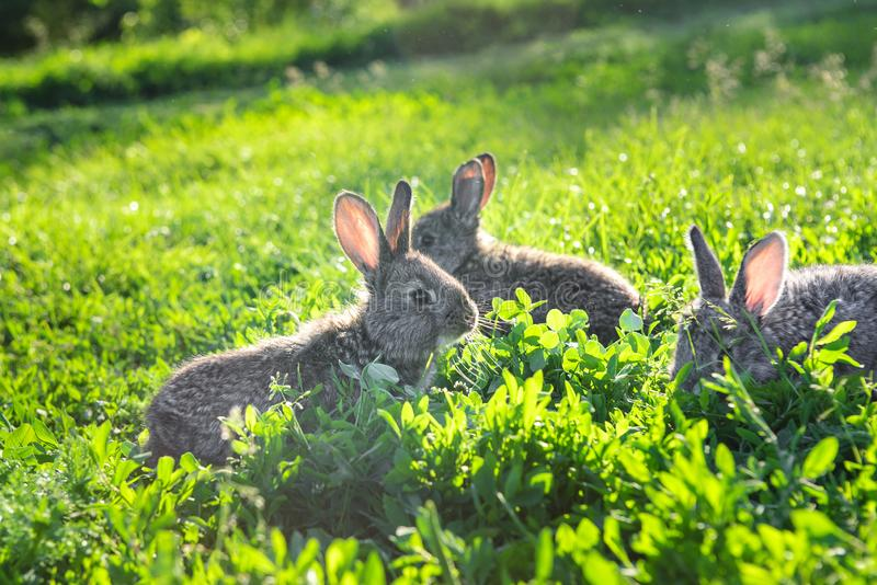 Pares de los conejos que se enfrían en la hierba fotos de archivo