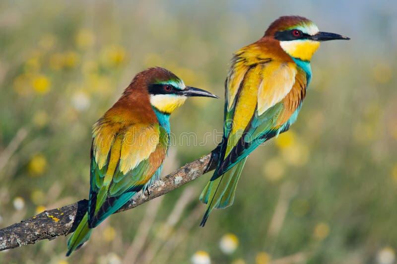 Pares de pájaros fotos de archivo