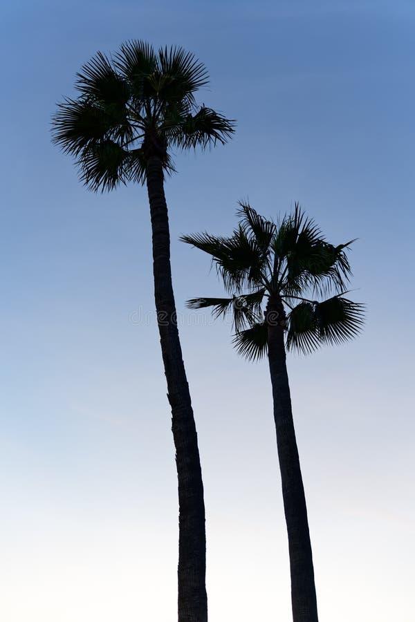 Pares de palmeiras mostradas em silhueta imagens de stock royalty free