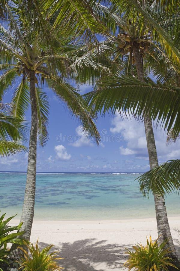 Pares De Palmeiras Na Praia Tropical Imagem de Stock Royalty Free