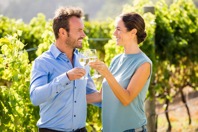 Pares de sorriso que brindam copos de vinho no vinhedo imagem de stock