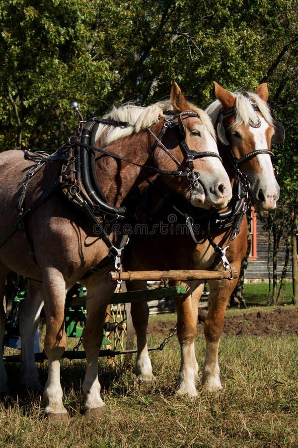 Pares del caballo fotos de archivo
