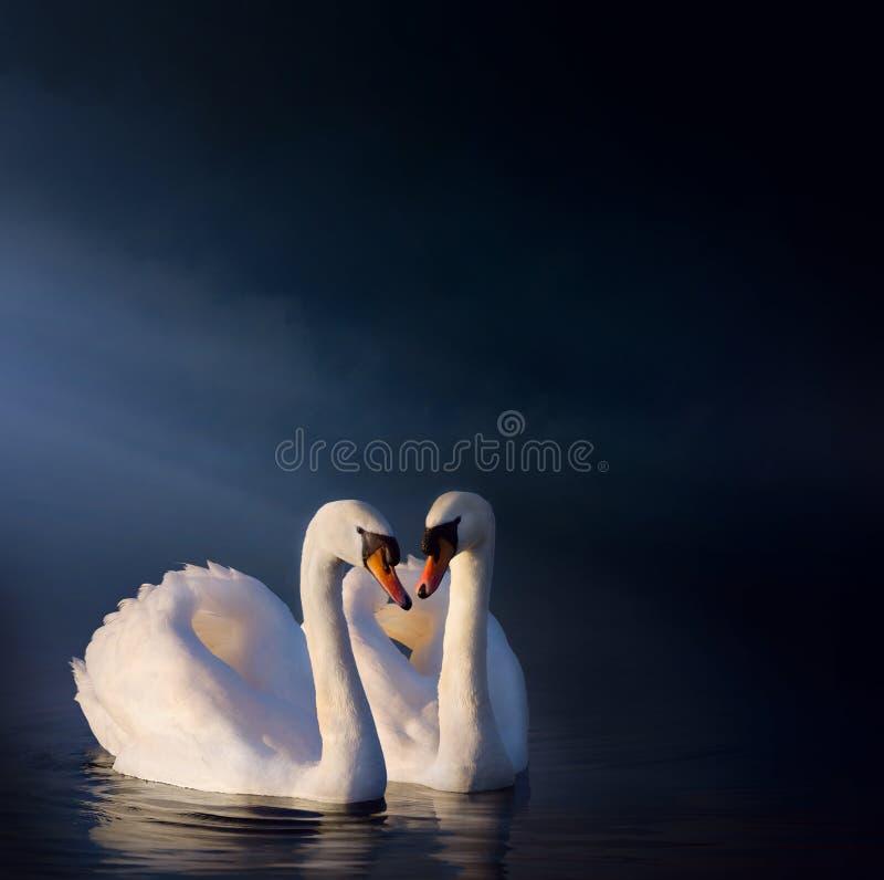 Pares del cisne de Art Romantic fotos de archivo libres de regalías