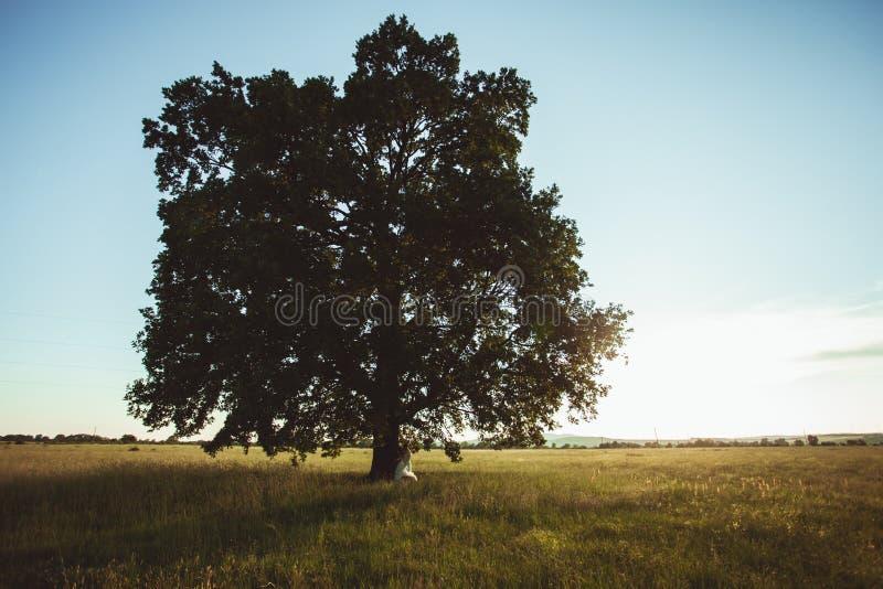 Pares do casamento sob a árvore fotos de stock