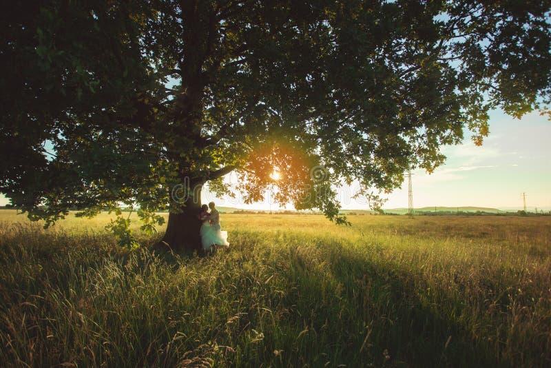 Pares do casamento sob a árvore imagem de stock