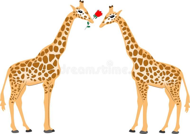 Pares do Giraffe ilustração stock