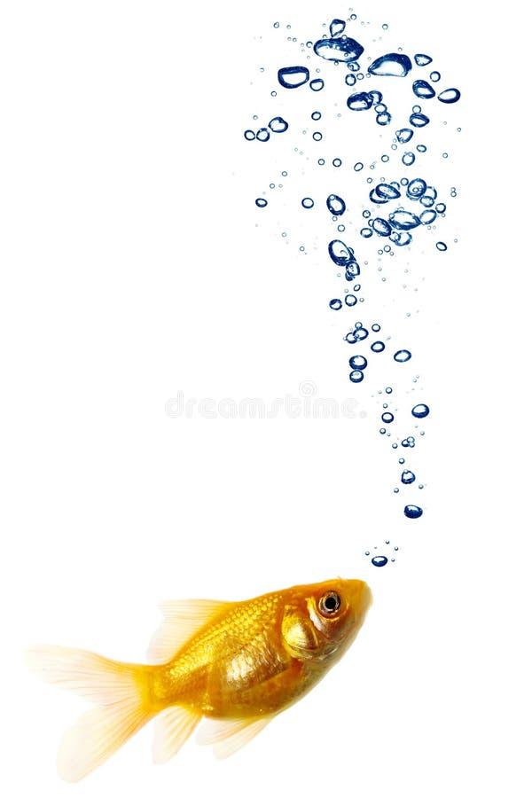Pares do Goldfish fotos de stock