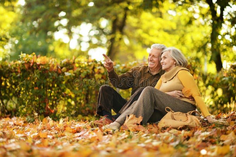 Pares en parque del otoño imagen de archivo