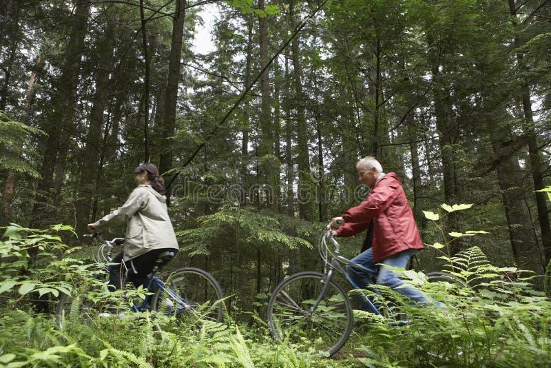 Pares envelhecidos meio com as bicicletas na floresta  imagem de stock royalty free