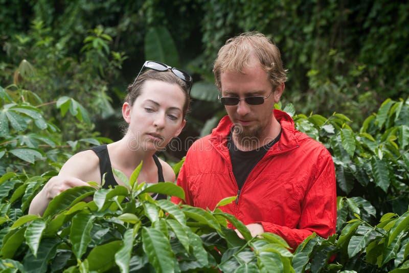 Pares europeus na plantação de café em Costa-Rica imagem de stock