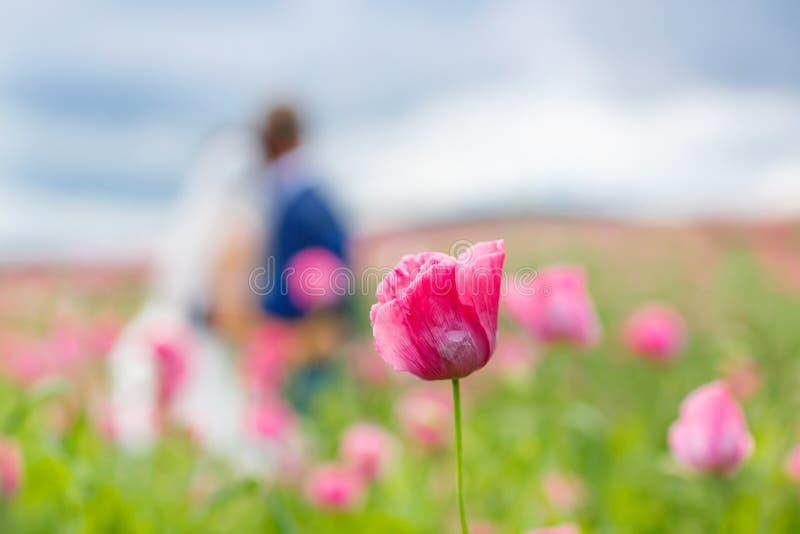 Pares felices de la boda en campo rosado de la amapola fotografía de archivo
