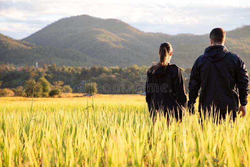 Pares hermosos del viajero en campos amarillos del arroz en Tailandia fotos de archivo