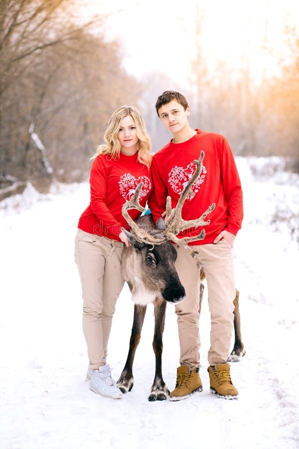 Pares hermosos en suéter rojo del invierno con un ciervo en la mirada del fondo del invierno en la cámara imágenes de archivo libres de regalías