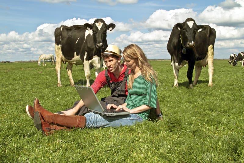 Pares jovenes entre las vacas imagenes de archivo
