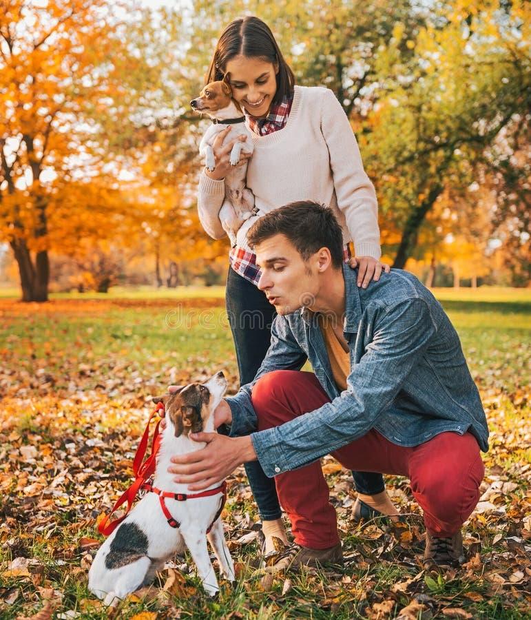 Pares jovenes felices con los perros que juegan al aire libre en parque del otoño imagen de archivo