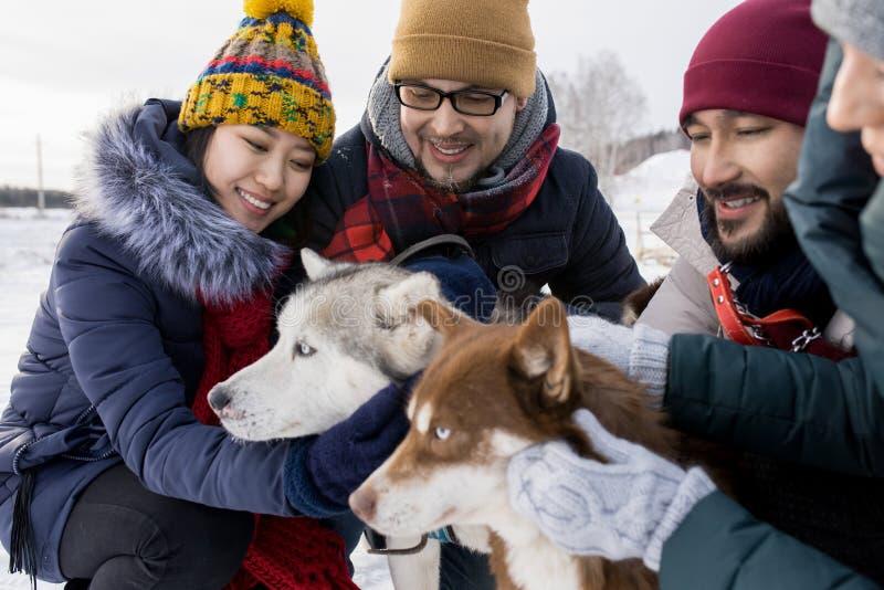 Pares jovenes que juegan con Husky Dogs imagen de archivo
